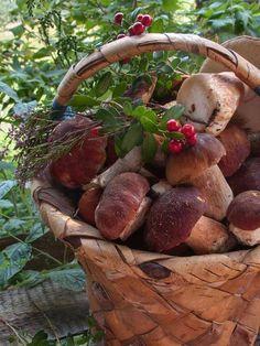 ~ A Country Life ~ Basket of Mushrooms . ᘡղlvbᘡ༺✿ ☾♡ ♥ ♫ La-la-la Bonne vie ♪ ♥❀ ♢♦ ♡ ❊ ** Have a Nice Day! ** ❊ ღ‿ ❀♥ ~Th Nov 2015 ~ ~ ❤♡༻ ☆༺❀ . Fruit And Veg, Fruits And Vegetables, Mushroom Fungi, Autumn Inspiration, Decor Inspiration, Farm Life, Country Life, Farmers Market, Wicker