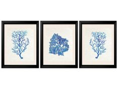 Blue Coral Prints Antique Illustration Blue by BeachHouseGallery
