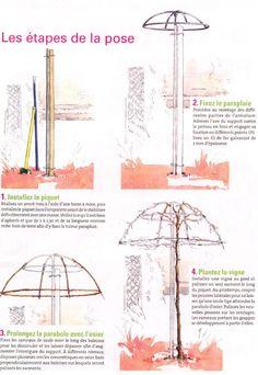 How to parasol-train a vine / Comment conduire une vigne en parasol. Use a weepi. How to parasol-t Wisteria Trellis, Trellis Fence, Rose Trellis, Garden Trellis, Backyard Planters, Backyard Fences, Garden Arbor, Garden Deco, Parasol