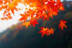 41 Free Fall Wallpapers and Backgrounds: The Best Fall Desktop Wallpapers