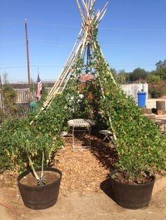 We have also started adding some mulch around our tee-pee and some potted trees as well.