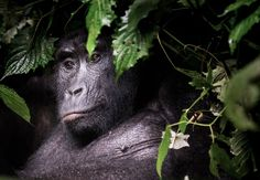 2016 National Geographic Nature Photographer of the Year | National Geographic