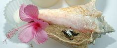 I love this idea for #beachwedding.  Can you just see your little ring bearer carrying in a decorated shell with rings???