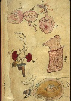 Anonymous Persian Anatomical Illustrations 1680-1750