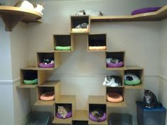 Cats homes