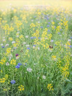 spring colors by ymk.sato on Flickr.