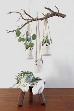 Planters from a British Potter. SHOWN INSIDE, WOULD DO WELL OUTSIDE AS WEL.I LOVE THIS. HANGING MOBILE OF PLANTINGS IN MARVELOUS SMALL CONTAINERS ..AND OF COURSE...THE TREE BRANCH.