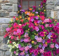 Beautiful blooms in window box Window Box Flowers, Window Boxes, Beautiful Flowers, Colorful Flowers, Balcony Flowers, Container Plants, Container Gardening, Succulent Containers, Container Flowers