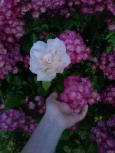 Flores lindas!!!🌹