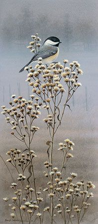 Degree of Dawn-Chickadee...by David Wenzel.... chickadee sitting on a sprig of tall flowering grasses as the pale misty gray light of dawn creates a tranquil atmosphere in the background.