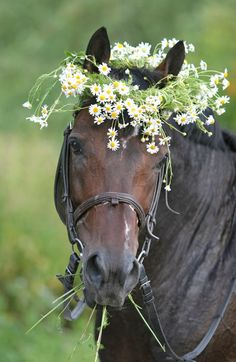 Horse with fresh picked wild flower wreath around it's head. This is precious…