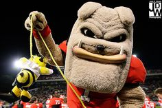Hush little bee, don't u sting the dawgs gonna clip your little damn wings, with no wings your ass can't fly...the dawgs gonna leave your ass to die....ha ha ha let's go dawgs!!!!