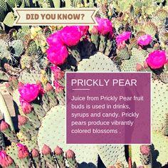 Phoenix Vacation Condos - Google+ Prickly Pear Juice, Pear Fruit, Condos, Phoenix, My Design, Vacation, Google, Vacations, Holidays Music