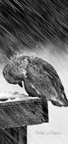 "Nature photo - Bird: ""Weathering The Storm! Love Birds, Beautiful Birds, Animals Beautiful, Regard Animal, Animals And Pets, Cute Animals, Tier Fotos, Bird Watching, Rainy Days"