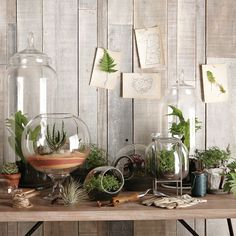 the only thing missing here are little hanging terrariums . you can't have too many, you know.