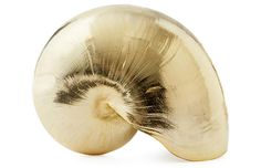Gold-Plated Chamber Nautilus