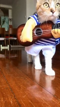 Funny Categories Fuunyy Net Red – Cat Singer Source by buythatgo Funny Animal Memes, Funny Animal Videos, Cute Funny Animals, Funny Animal Pictures, Cute Baby Animals, Cat Memes, Funny Cute, Cute Cats, Funny Memes
