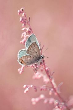 Butterfly with flower... - Aqua and pink
