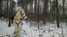 After almost 13 years together this is the first time Ziggy and I have ridden in the snow! Natural Horsemanship, My Art Studio, Roads, The One, First Time, Past, My Arts, Mountain, Ice