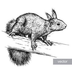 47636384-engrave-isolated-vector-squirrel-illustration-sketch-linear-art.jpg (450×450)