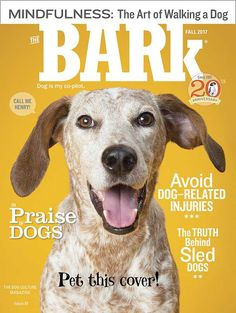 The Bark is the first dog magazine to tap into the exploding phenomena of dog culture and lifestyle. Animal Magazines, Pet Mat, Pet Food, Pet Lovers, Animal Design, Magazine Design, Editorial Design, Animals And Pets, Web Design