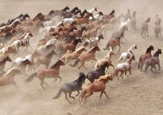 Running wild....sometimes I get sad to think horses can't run free and just BE!