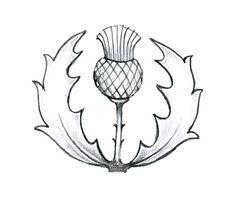 scothish thistle by enguerrand.deviantart.com on @deviantART