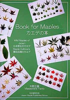 Book For Maples #Jap