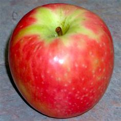 Pink Lady Apple Tree - Southern Apple Trees | Standard Apple Trees | Apple-Specialty Trees - Willis Orchard Company