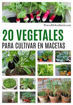 20 Vegetales Para Cultivar En Macetas - Pin Tutorial and Ideas