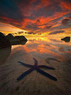 ~~Etu Moana ~ blue starfish, Aitutaki Atoll, Cook Island, South Pacific by Michael Anderson~~