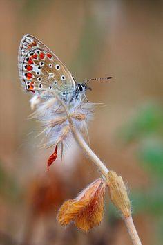 花の金曜日に・・・・蝶々 の画像|さとおっちゃん的 男の庭つくり