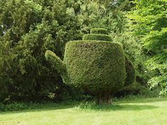 Amusing+topiary+in+the+shape+of+a+teapot+at+Lake+House+in+hampshire