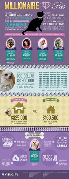 Millionaire Pets: Richest Animals In The World (INFOGRAPHIC) #doginfographic Cat Care Tips, Pet Care, World's Most Expensive Dog, Seo Tutorial, Pet News, Information Graphics, New Puppy, Going To Work, Dog Grooming