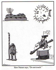 Far Side Cartoon: How Nature Says, Do Not Touch