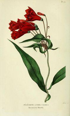 v.4 (1835-1836) - Annales de flore et de pomone : - Biodiversity Heritage Library
