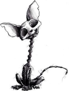 Cat skeleton sketch