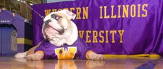 "Western Illinois University Leathernecks. Colonel Rock.  WIU is the only non-military institution in the nation with permission from the Department of the Navy to use the United States Marine Corps Official seal and mascot, the Bulldog. Colonel Rock, or Rocky, is the University mascot representing ""The Fighting Leathernecks"" for all male sports teams. Rocky was named after Ray ""Rock"" Hanson, a former WIU athletic director and former Marine. Women's teams had been known as Westerwinds."