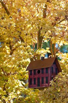 cute bird houses in trees