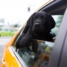 Cruising into the weekend like... #todaypuppy (���