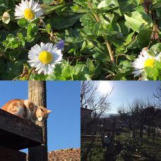 Bella Italia im Februar in den Marken #Marche #italien Pergola, Plants, Animals, February, Branding, Animais, Animales, Animaux, Outdoor Pergola