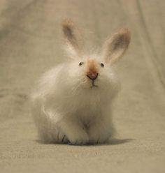 Bunny by Russian artist Natasha Faveeda. via the artist's site