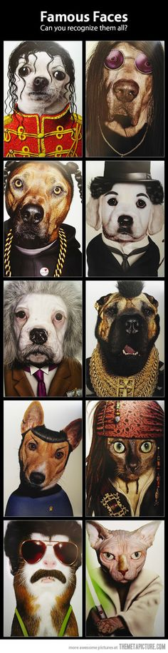 funny-dogs-that-look-like-famous-people<--- even though there are cats and a hamster in there as well.
