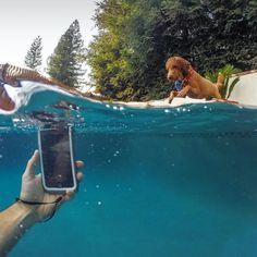 Fun shot by Waterproof protection lets you take that action shot.