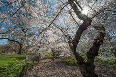 Central Park Sunburst by Lumn8tion, via Flickr