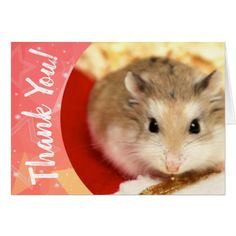 Hammyville - Cute Hamster Thank You Card - fun gifts funny diy customize personal Candy Gifts, Gag Gifts, Thank You Gifts, Thank You Cards, Staff Appreciation Gifts, Gourmet Gift Baskets, Cute Hamsters, Coffee Gifts, Chocolate Gifts