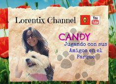 Manana sabado como siempre nuevo video con Candy te va a encantar! Suscribete www.youtube.com/user/lorentix #dog #cotondetulear #puppy #pup #pet
