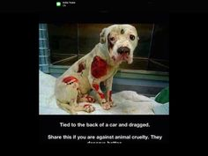 If ur against animal cruelty pin this pin we want to help this poor doggie