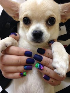 Chihuahua Garisson