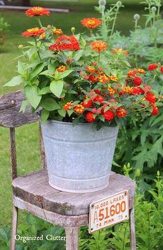 Galvanized bucket on weathered chair. Orange zinnias and lantana - stunning!
